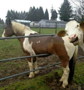 Cow Horse